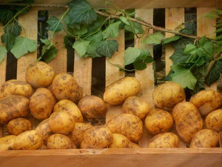 5 problemas comunes del almidón de papa en el sector alimentos