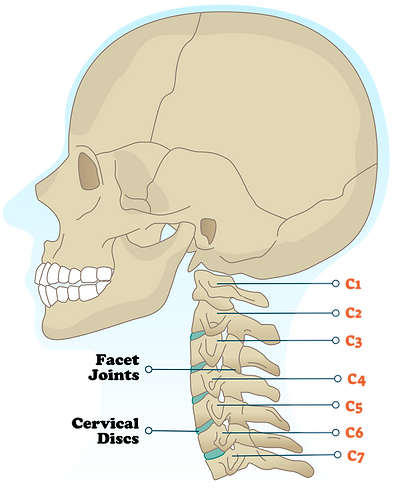 031821-Figure1-neck-anatomy-211652506.pn