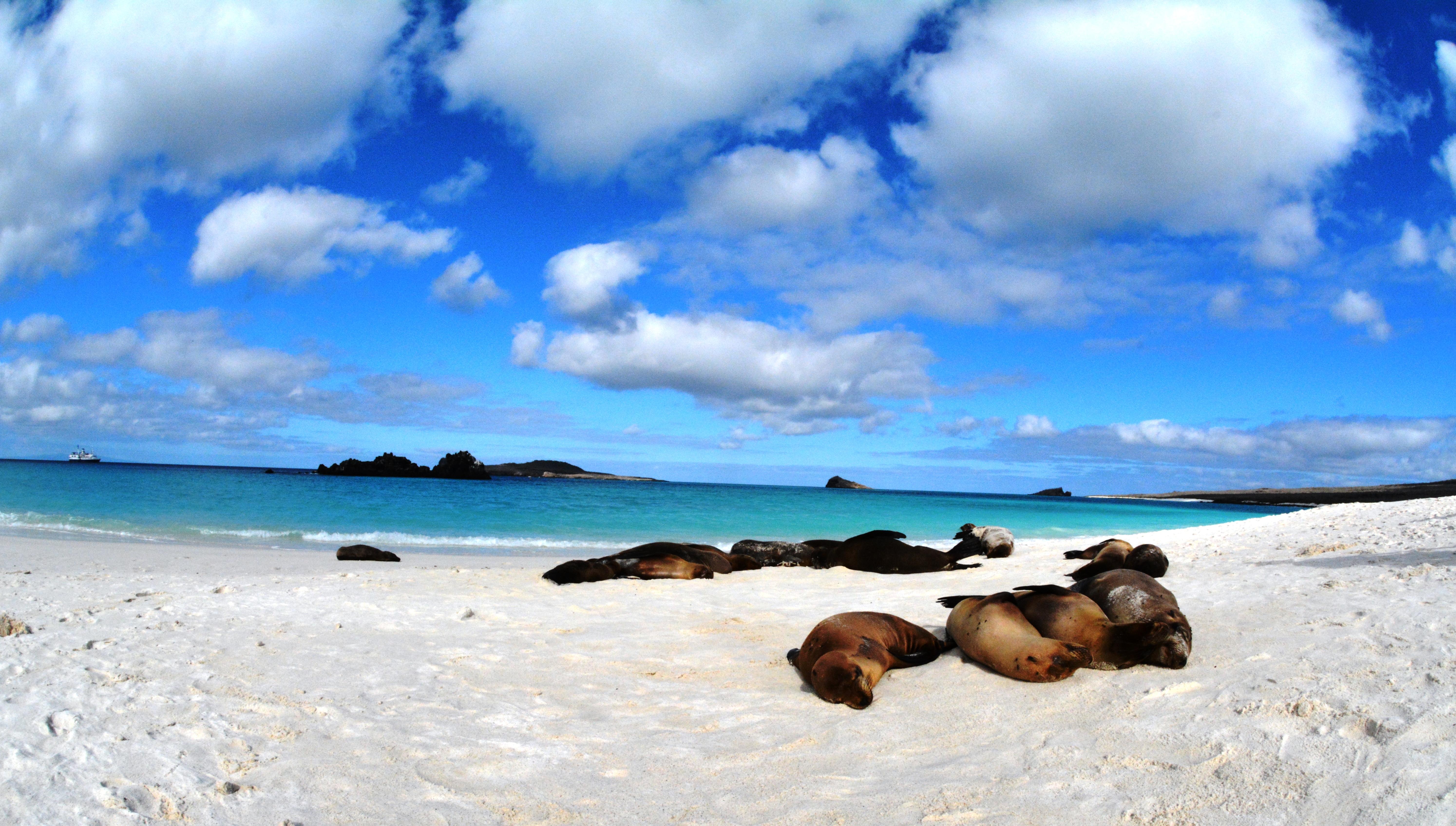 Sjölejon, Galapagosöarna