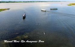 Amazonasfloden, rosa floddelfiner