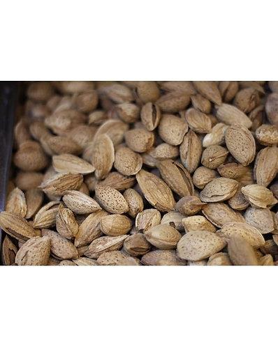 American Almond Sonara Medium