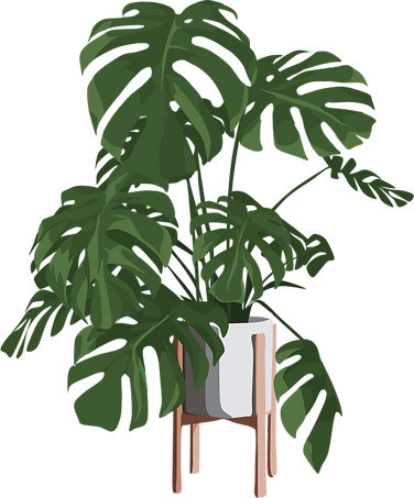cheese plant illustration.png