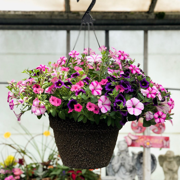 Deluxe Hanging Annual Basket
