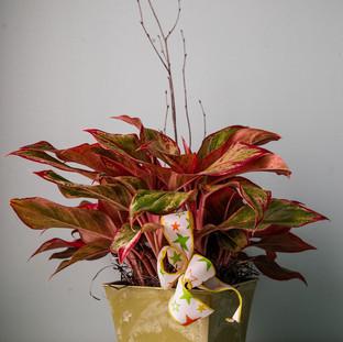 Tropical House Plant $40