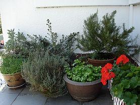 Growing Culinary Herbs.jpg