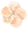 FLOWER_8 2.png
