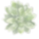 FLOWER_21 2.png