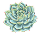 FLOWER_21.png