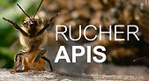 logo Rucher Apis.jpg