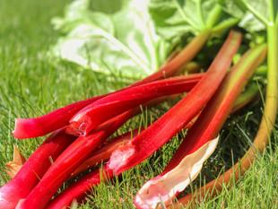Cet été, en cuisine… la rhubarbe !