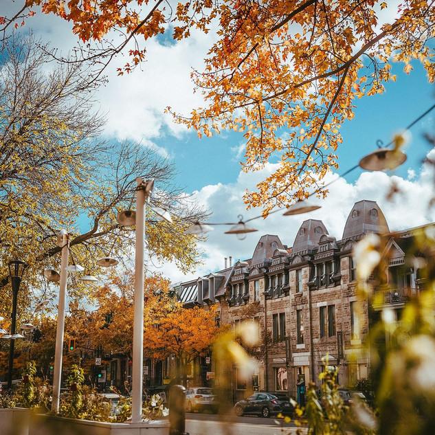 La rue Saint-Denis en automne