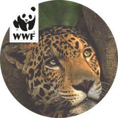 WWF_Logo_charity_1833px_240x240.png