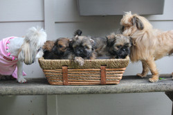 Mommy, Daddy and Puppies