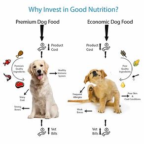 Investing-in-Premium-Dog-Food-FINAL.webp