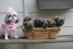 Bree and her 8 Week old puppies