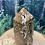 "Thumbnail: Brown ""Chocolate"" Calcite Obelisk bubbles"