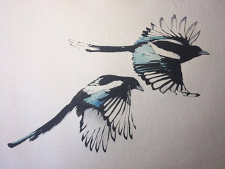 Magpies - continued