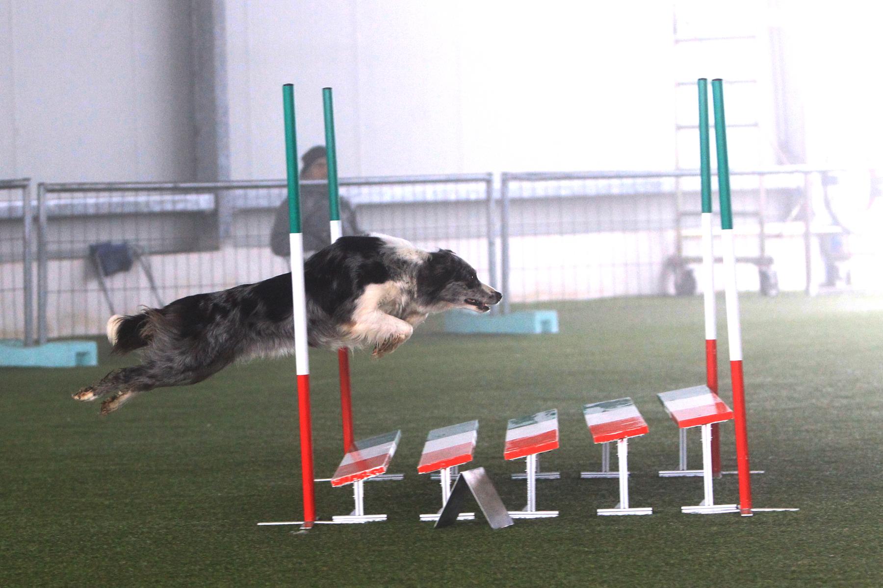 Didi agility