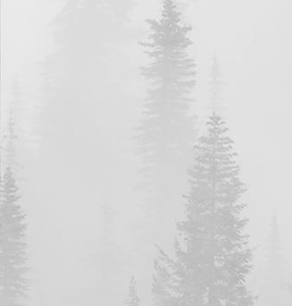 BetweenTheTrees_AdiescarChase_AlbumArt_e