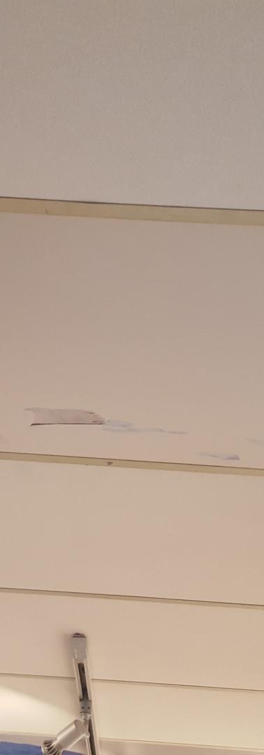 expo plafond