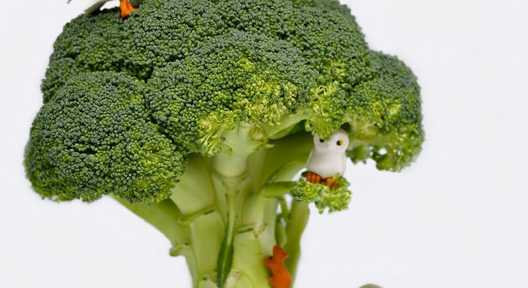 Arbre brocoli