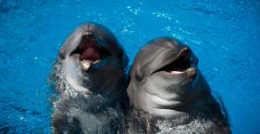 Dolphin Show - Ushaka - Durban