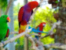 khanya-birdpark.jpeg
