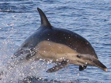 Khanya-Dolphin-Watching-Oribi-Gorge.jpg
