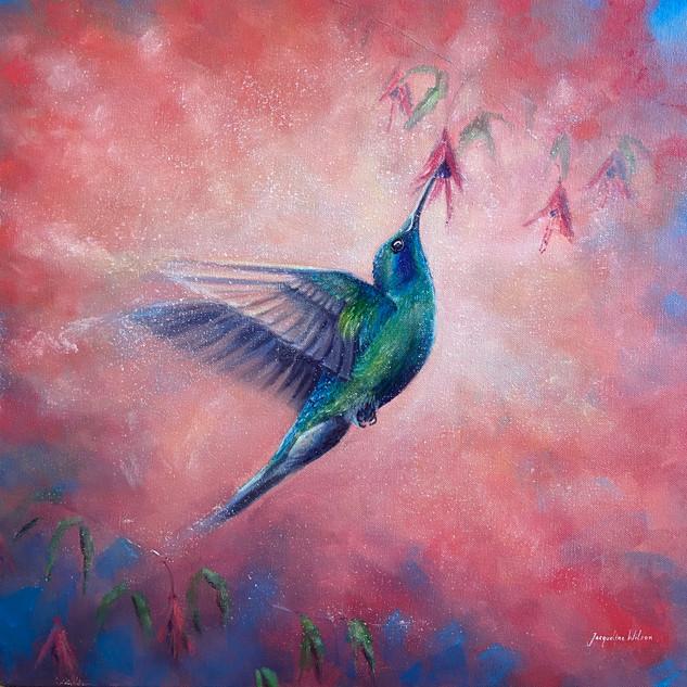 Vilotear Hummingbird