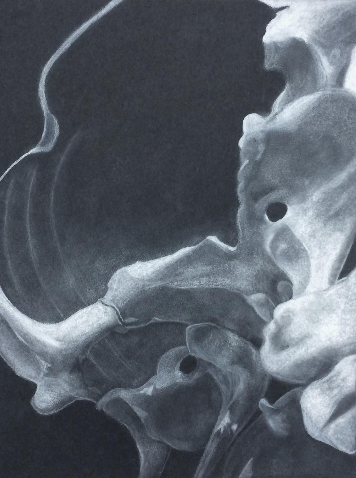 Iannarelli_Skull.jpg