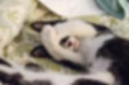 cat-2561563_960_720.jpg