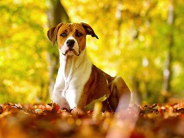 Halton Hills Pet services, Georgetown dog walker, Dog Walker Halton Hills, Pet services Georgetown, Dog sitting Georgetown