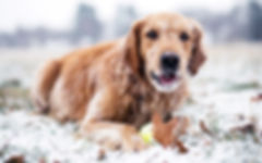 Georgetown Dog Walker, Dog walker Halton Hills, Dog Walking Georgetown, Pet sitting Halton Hills, Doggy Daycare Georgetown, Pet sitting Georgetown, Halton HIlls Pet sitting, Doggy Adventures Halton Hills, Cat sitting Georgetown,
