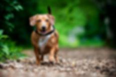 Georgetown Dog Walker