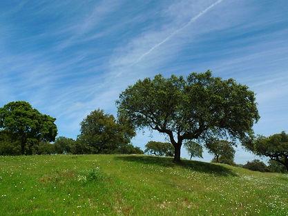 tree-2104276_1920.jpg