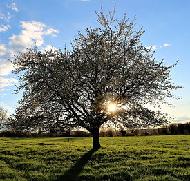 tree-3816328_1920.jpg