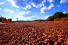 Brazil Mogiana natural.jpg