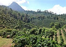 honduras%20valley_edited.jpg