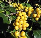 Bourbon_Yellow Pocos.jpg
