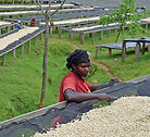 Rwanda Meuhororo