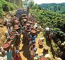 Costa Rica pickers 2.jpg