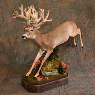 Leapiong Whitetail Rear Elevated