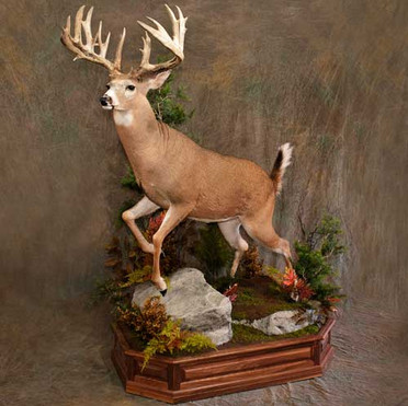 Leaping Whitetail Front Elevated