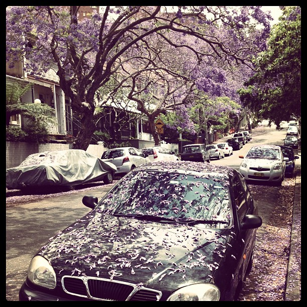 #sydney #jacaranda #car #street #spring #flowers #australia #purple #tree #live #world #macchina
