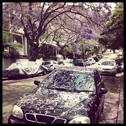 #sydney #jacaranda #car #street #spring #flowers #australia #purple #tree #live #world #macchina