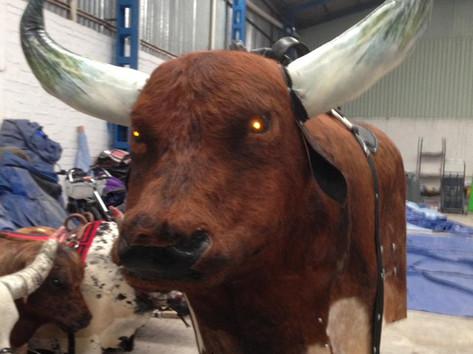 Toro con piel cap 145 kilos