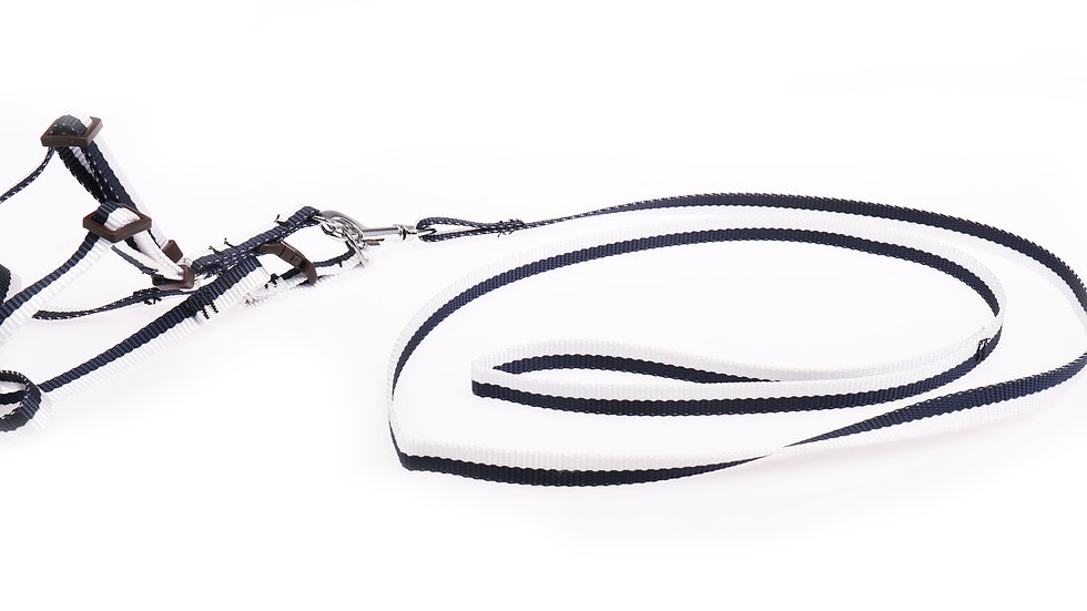 stripped dog leash with harness