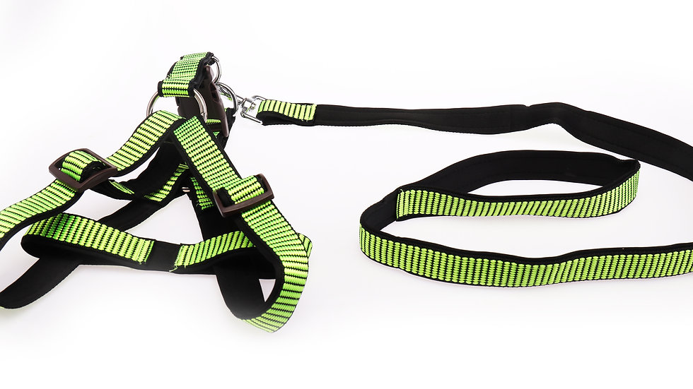 Nylon dog leash with harness