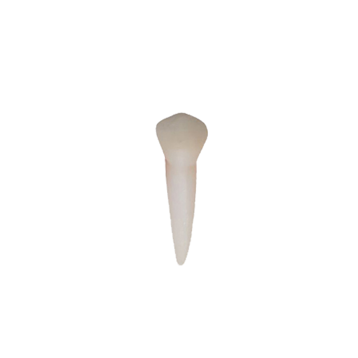 2° pré molar inferior