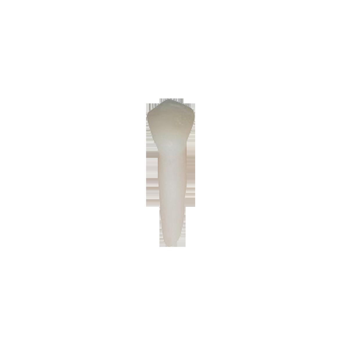 1° pré molar inferior